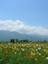 20070522flower02