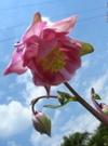 20070522flower03