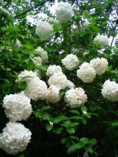 20080505botanical02