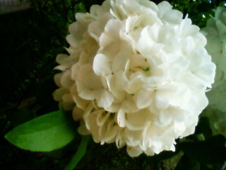 20080505botanical03