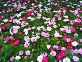 20090919flower01