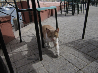 20100303cats01