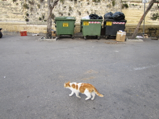 20100303cats02