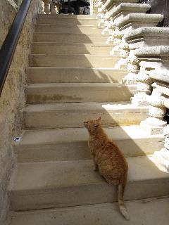 20100303cats03